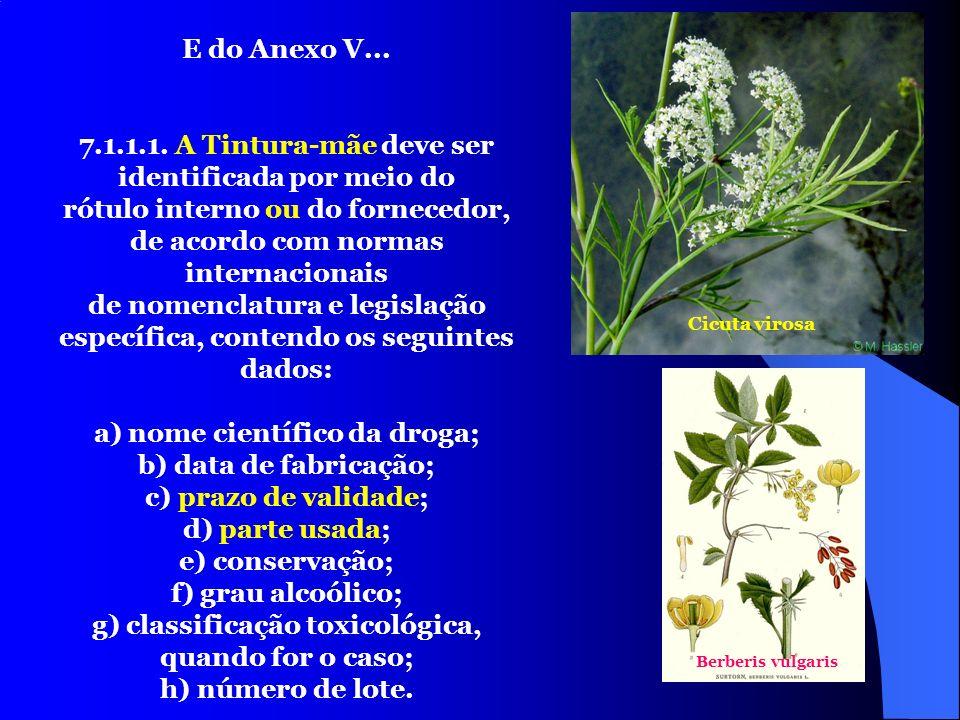 24 E do Anexo V... 7.1.1.1. A Tintura-mãe deve ser identificada por meio do rótulo interno ou do fornecedor, de acordo com normas internacionais de no