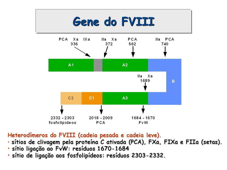 Heterodímeros do FVIII (cadeia pesada e cadeia leve). sítios de clivagem pela proteína C ativada (PCA), FXa, FIXa e FIIa (setas). sítios de clivagem p