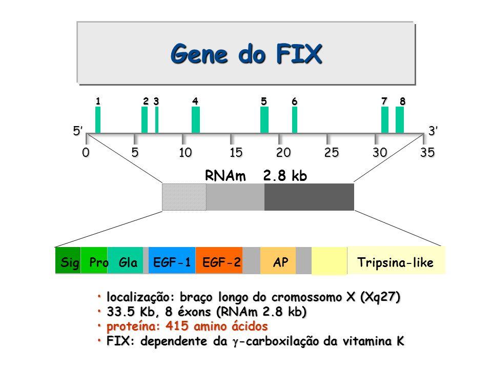 Gene do FIX localização: braço longo do cromossomo X (Xq27) localização: braço longo do cromossomo X (Xq27) 33.5 Kb, 8 éxons (RNAm 2.8 kb) 33.5 Kb, 8
