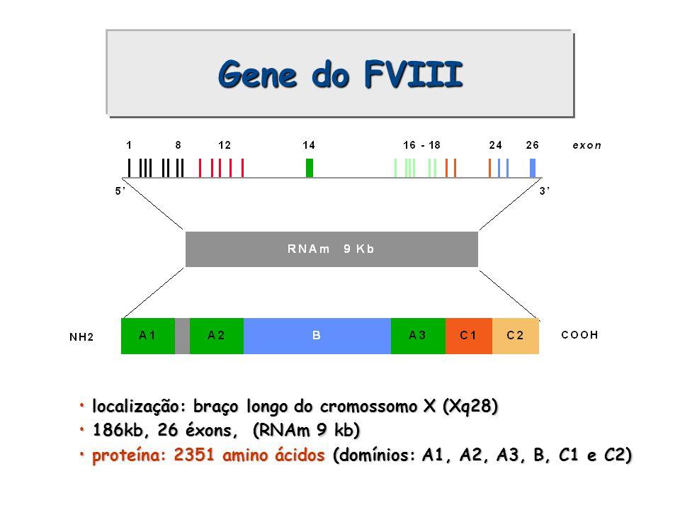 Gene do FVIII localização: braço longo do cromossomo X (Xq28) localização: braço longo do cromossomo X (Xq28) 186kb, 26 éxons, (RNAm 9 kb) 186kb, 26 é