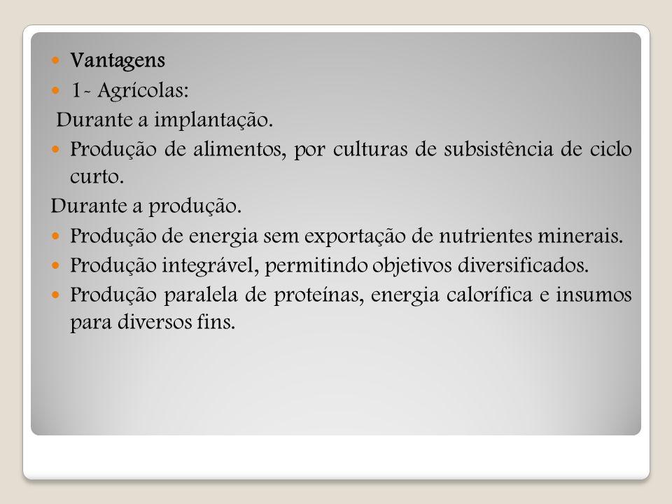 Vantagens 1- Agrícolas: Durante a implantação. Produção de alimentos, por culturas de subsistência de ciclo curto. Durante a produção. Produção de ene