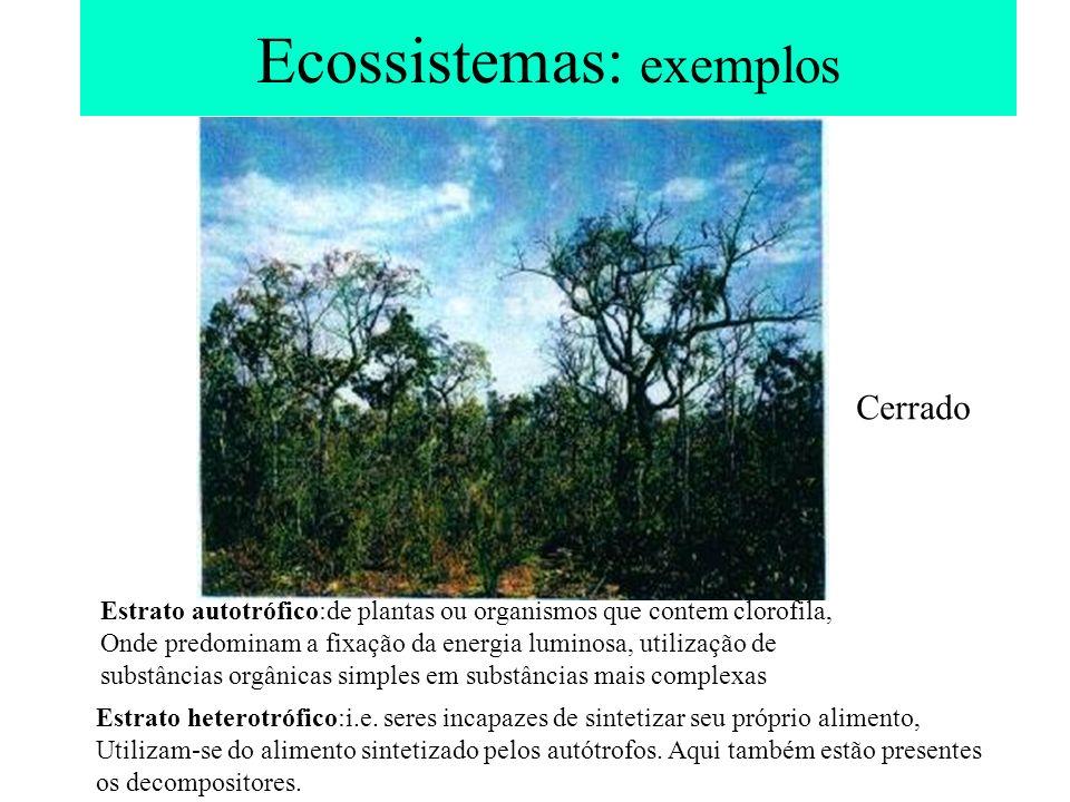 Ecossistemas: exemplos Estrato autotrófico:de plantas ou organismos que contem clorofila, Onde predominam a fixação da energia luminosa, utilização de