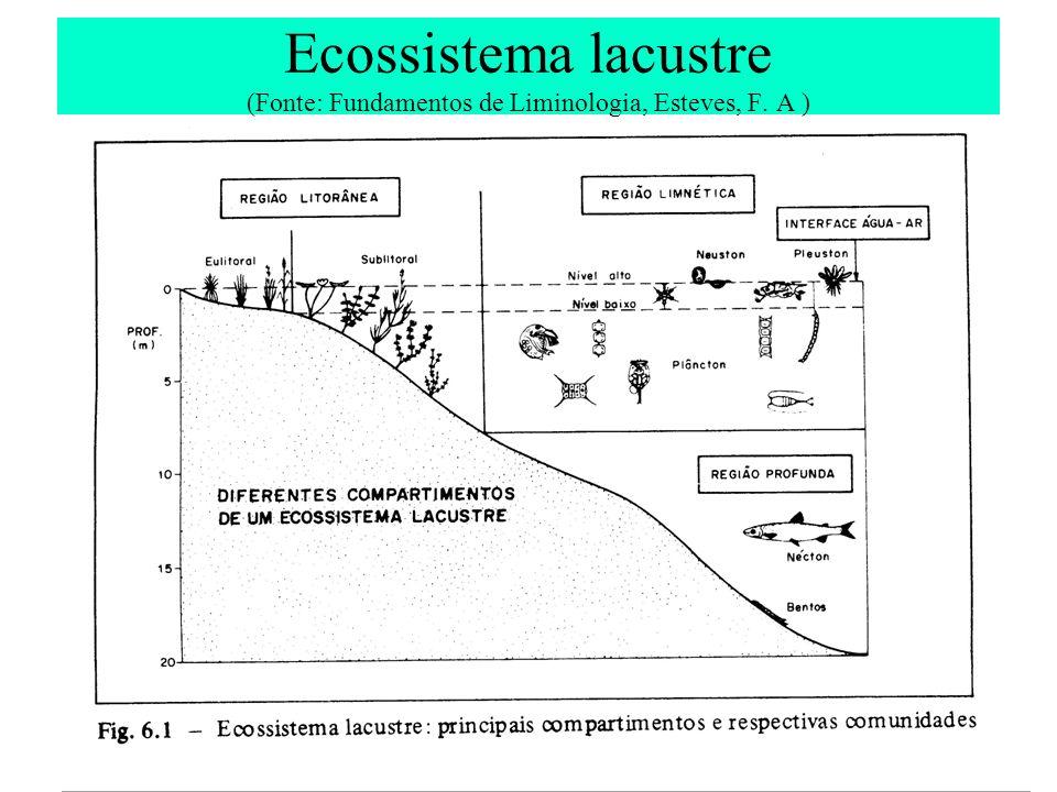 Ecossistema lacustre (Fonte: Fundamentos de Liminologia, Esteves, F. A )
