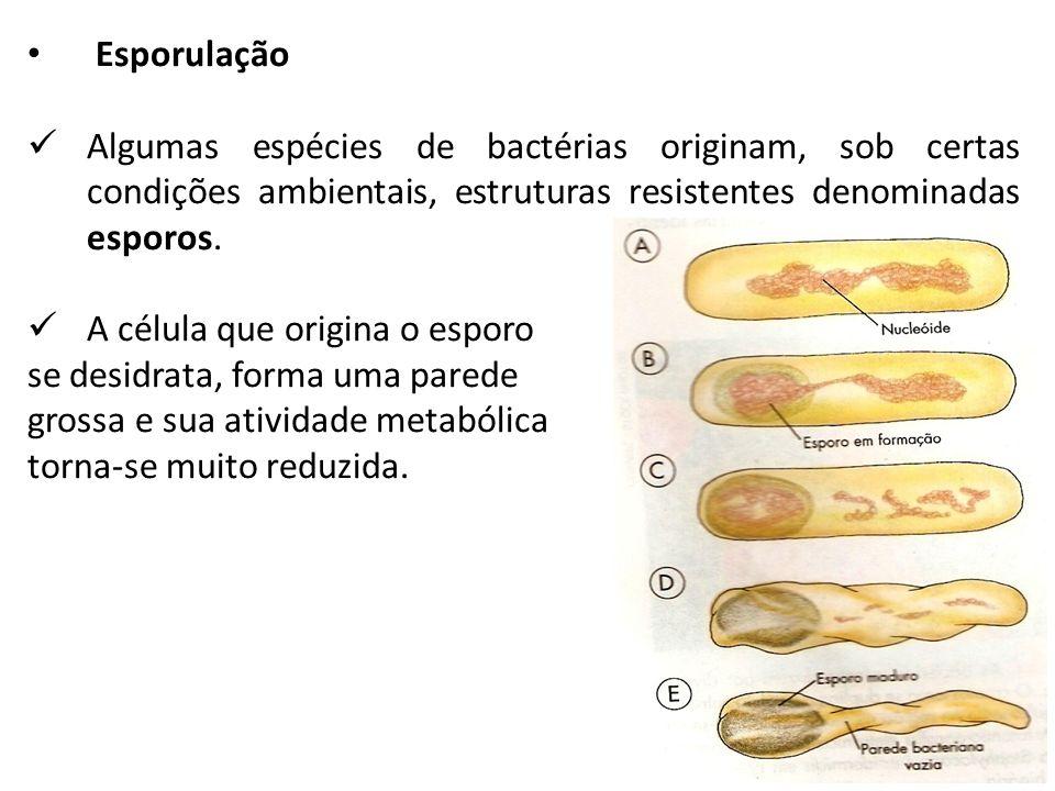 Esporulação Algumas espécies de bactérias originam, sob certas condições ambientais, estruturas resistentes denominadas esporos. A célula que origina