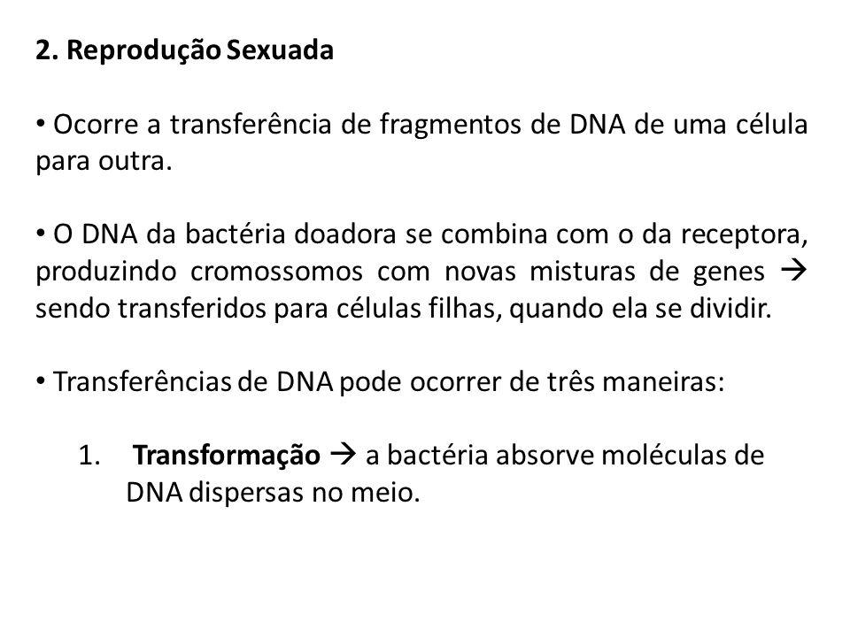 2. Reprodução Sexuada Ocorre a transferência de fragmentos de DNA de uma célula para outra. O DNA da bactéria doadora se combina com o da receptora, p