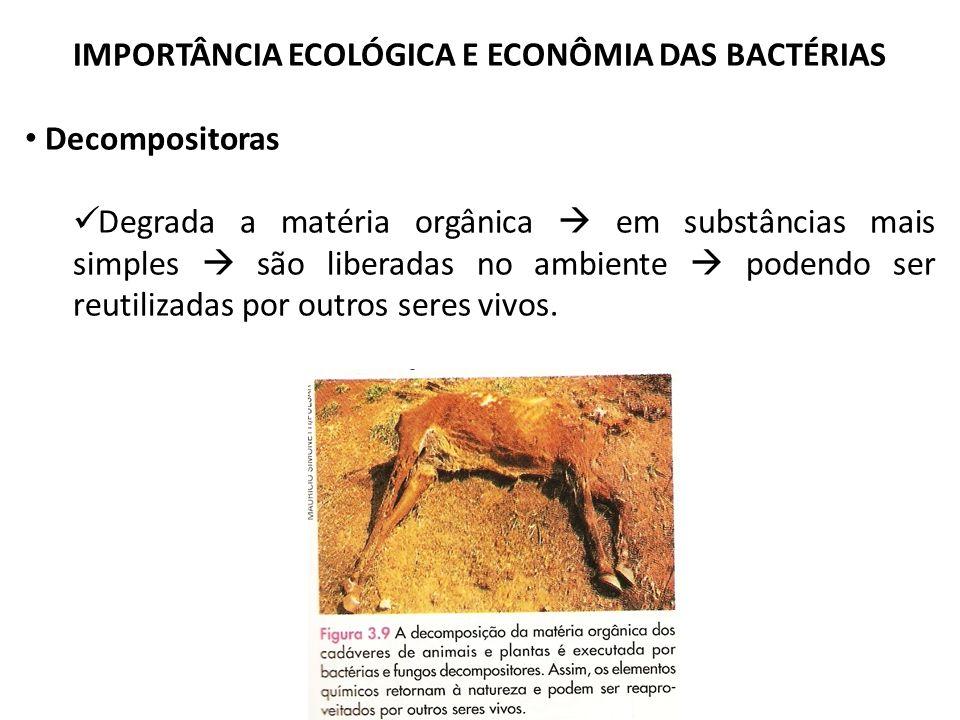 IMPORTÂNCIA ECOLÓGICA E ECONÔMIA DAS BACTÉRIAS Decompositoras Degrada a matéria orgânica em substâncias mais simples são liberadas no ambiente podendo