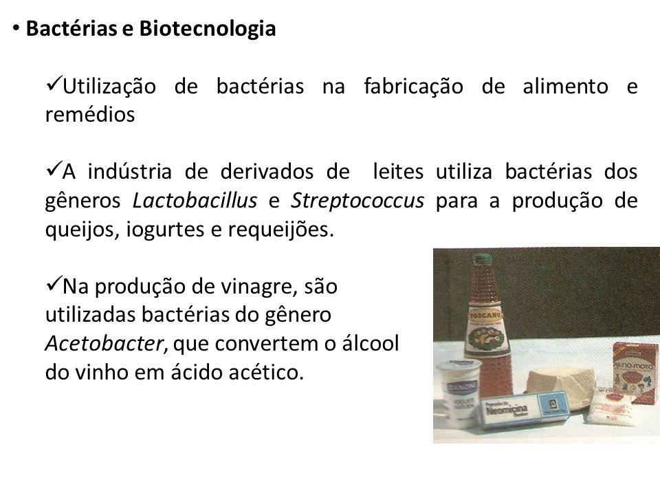 Bactérias e Biotecnologia Utilização de bactérias na fabricação de alimento e remédios A indústria de derivados de leites utiliza bactérias dos gênero