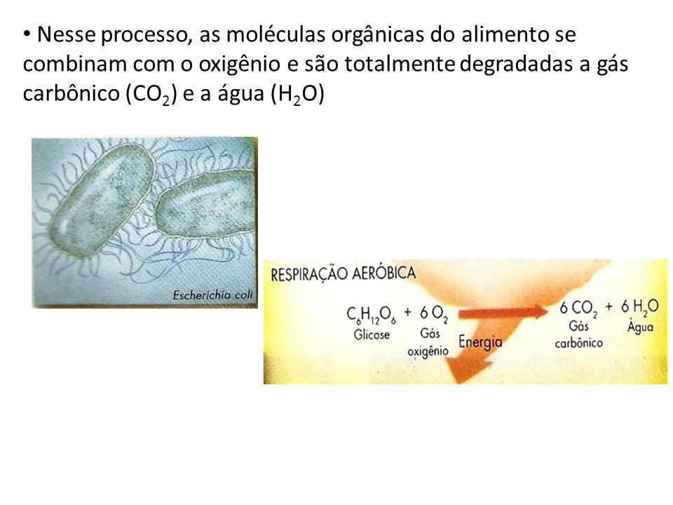 Nesse processo, as moléculas orgânicas do alimento se combinam com o oxigênio e são totalmente degradadas a gás carbônico (CO 2 ) e a água (H 2 O)