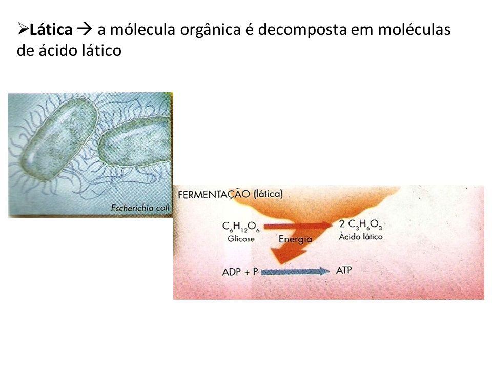 Classificação das bactérias de acordo à Respiração Aeróbios Restritos ou obrigatórias: Vivem só em presença de oxigênio.