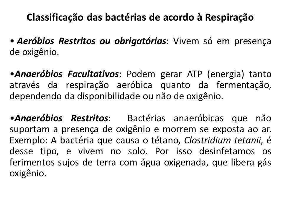 Classificação das bactérias de acordo à Respiração Aeróbios Restritos ou obrigatórias: Vivem só em presença de oxigênio. Anaeróbios Facultativos: Pode