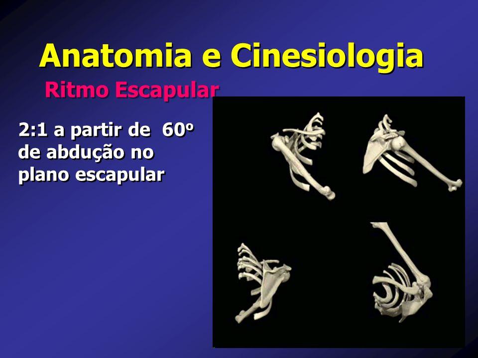 Anatomia e Cinesiologia Importância do Sincronismo nas Ações do Manguito Rotador e Deltóide
