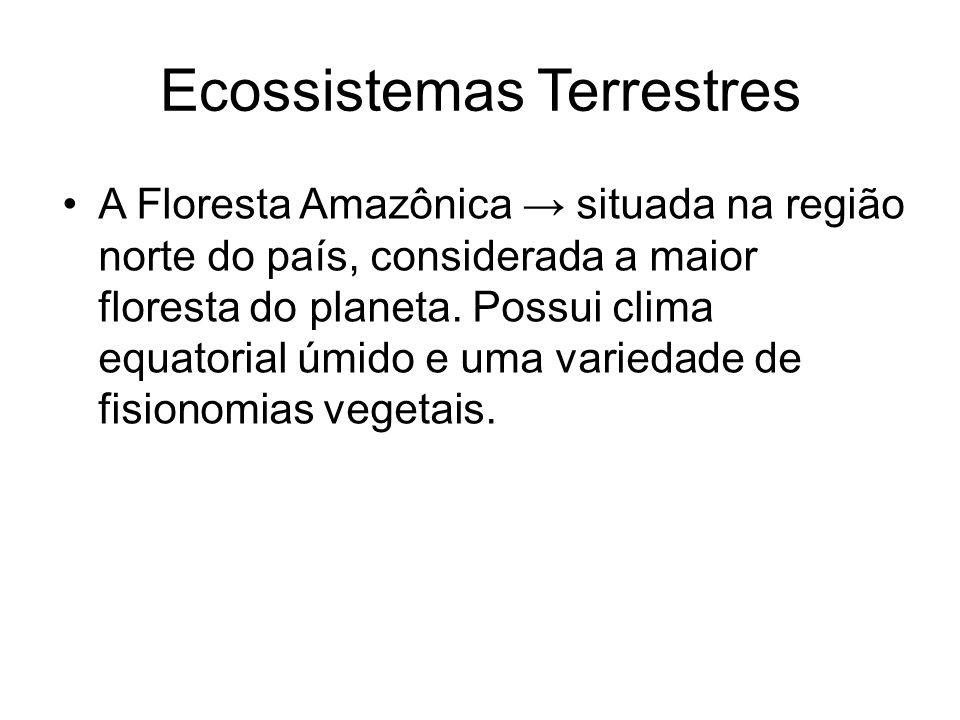 Ecossistemas Terrestres A Floresta Amazônica situada na região norte do país, considerada a maior floresta do planeta. Possui clima equatorial úmido e