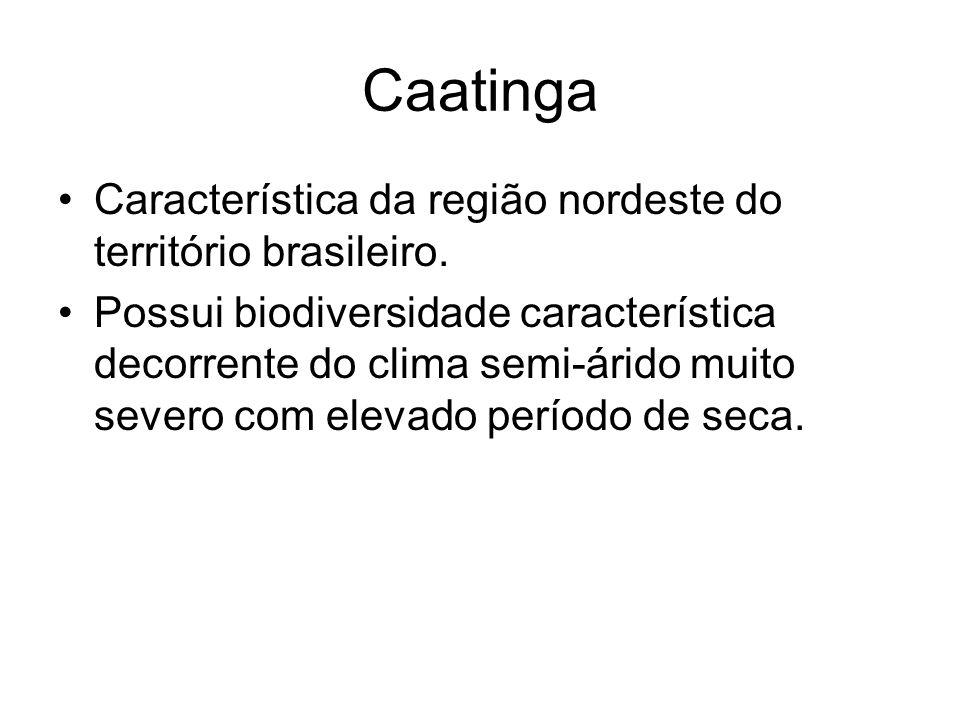 Caatinga Característica da região nordeste do território brasileiro. Possui biodiversidade característica decorrente do clima semi-árido muito severo