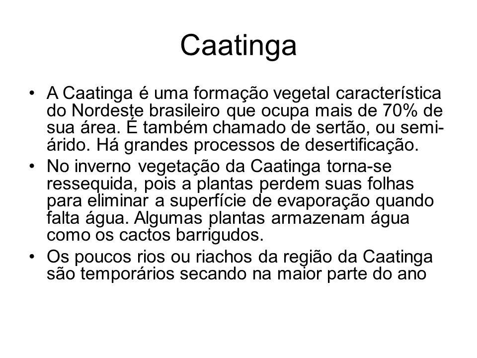 Caatinga A Caatinga é uma formação vegetal característica do Nordeste brasileiro que ocupa mais de 70% de sua área. É também chamado de sertão, ou sem