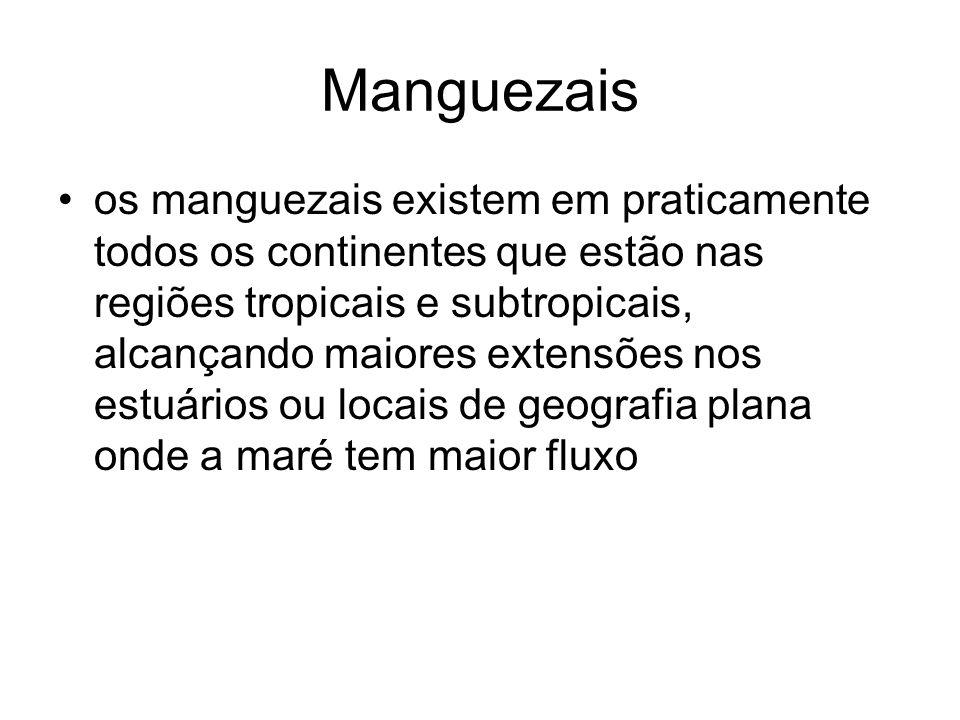 Manguezais os manguezais existem em praticamente todos os continentes que estão nas regiões tropicais e subtropicais, alcançando maiores extensões nos
