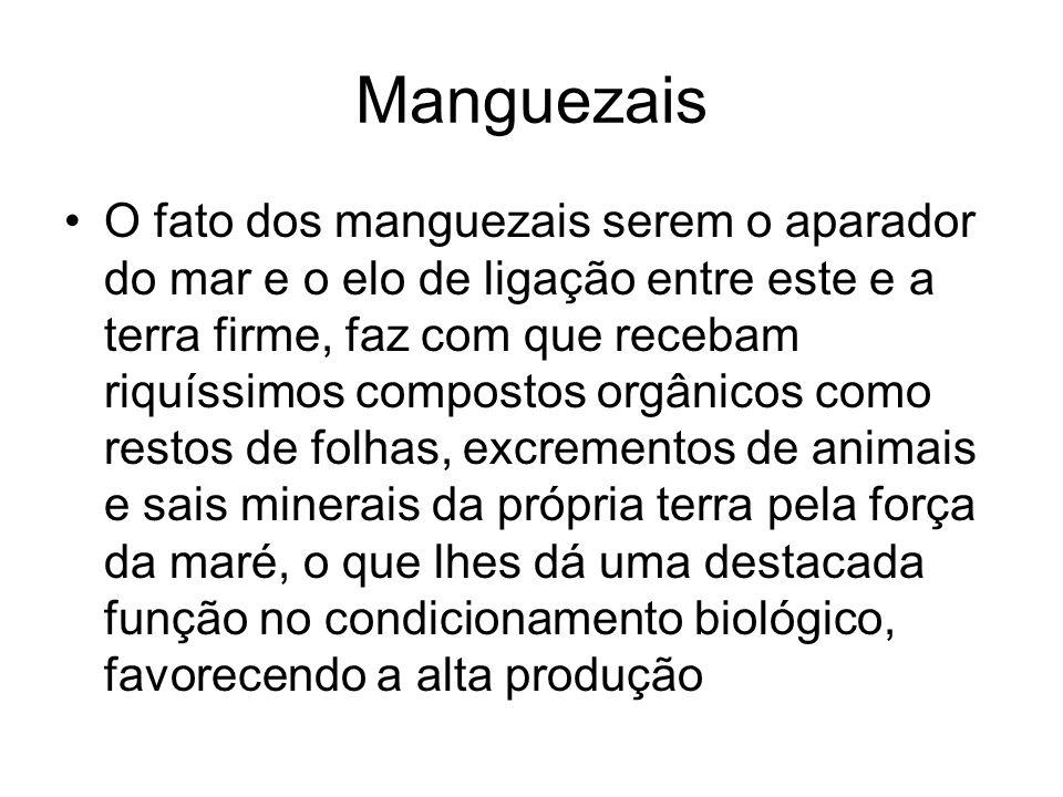 Manguezais O fato dos manguezais serem o aparador do mar e o elo de ligação entre este e a terra firme, faz com que recebam riquíssimos compostos orgâ