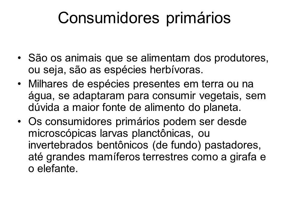 Consumidores primários São os animais que se alimentam dos produtores, ou seja, são as espécies herbívoras. Milhares de espécies presentes em terra ou