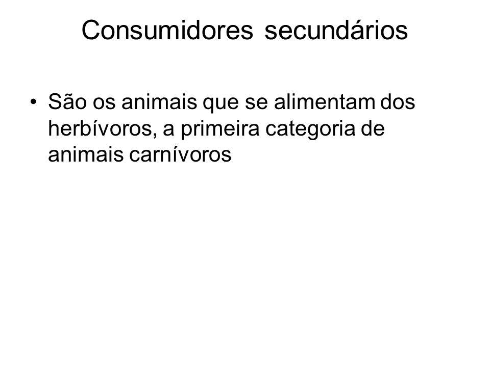 Consumidores secundários São os animais que se alimentam dos herbívoros, a primeira categoria de animais carnívoros