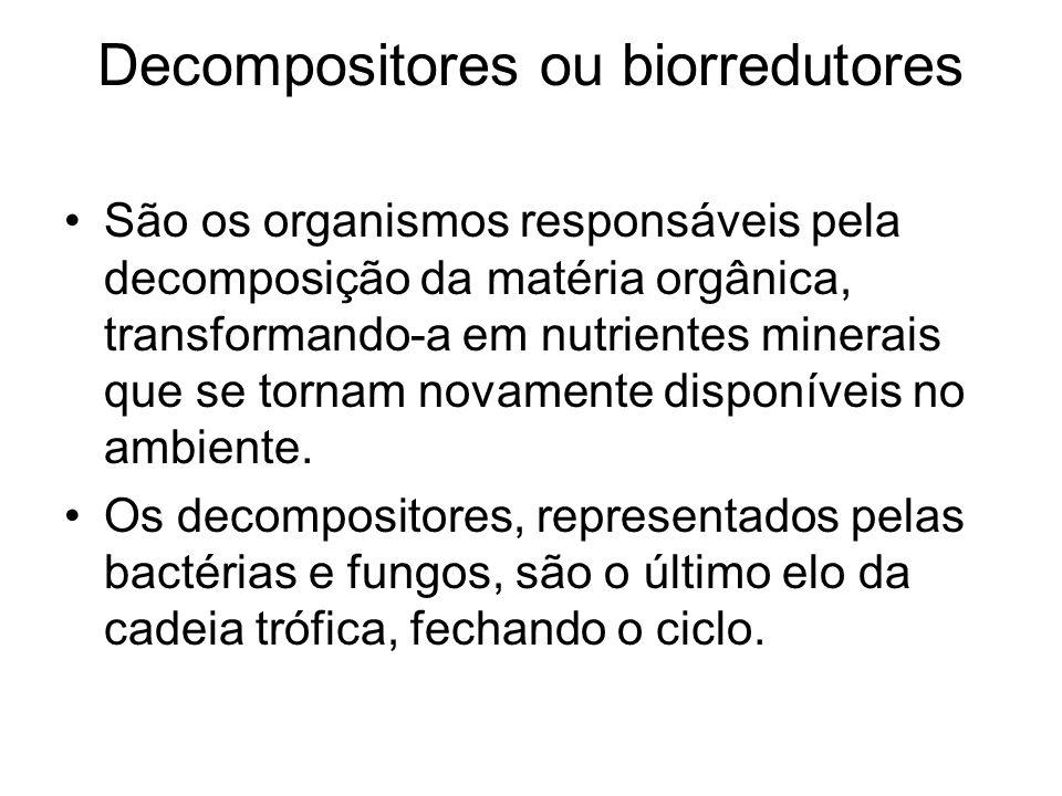 Decompositores ou biorredutores São os organismos responsáveis pela decomposição da matéria orgânica, transformando-a em nutrientes minerais que se to