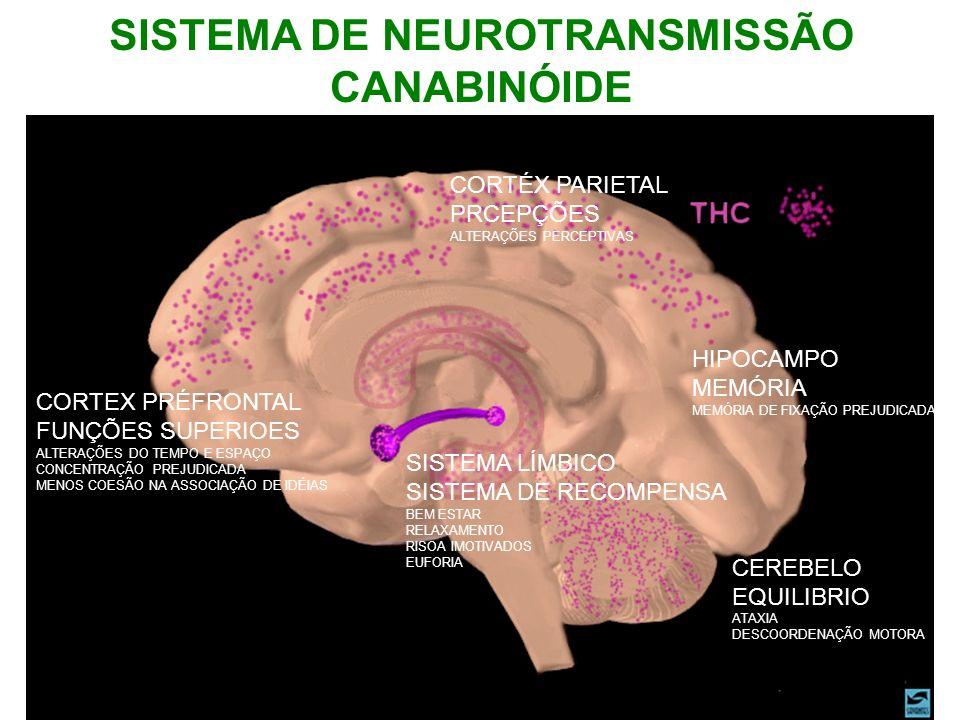 SISTEMA DE NEUROTRANSMISSÃO CANABINÓIDE CORTÉX PARIETAL PRCEPÇÕES ALTERAÇÕES PERCEPTIVAS HIPOCAMPO MEMÓRIA MEMÓRIA DE FIXAÇÃO PREJUDICADA CEREBELO EQU