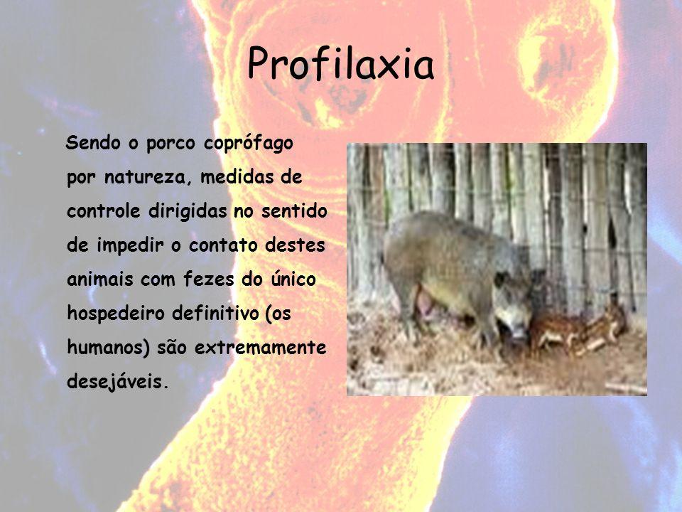 Profilaxia Sendo o porco coprófago por natureza, medidas de controle dirigidas no sentido de impedir o contato destes animais com fezes do único hospe
