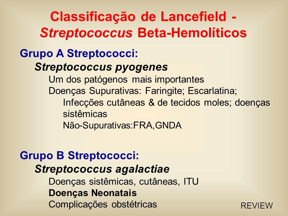Streptococcus pyogenes (Contraste de fase)