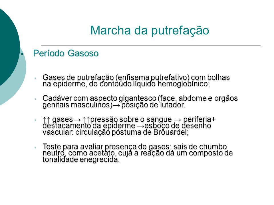 Período Gasoso Período Gasoso Gases de putrefação (enfisema putrefativo) com bolhas na epiderme, de conteúdo líquido hemoglobínico; Gases de putrefaçã