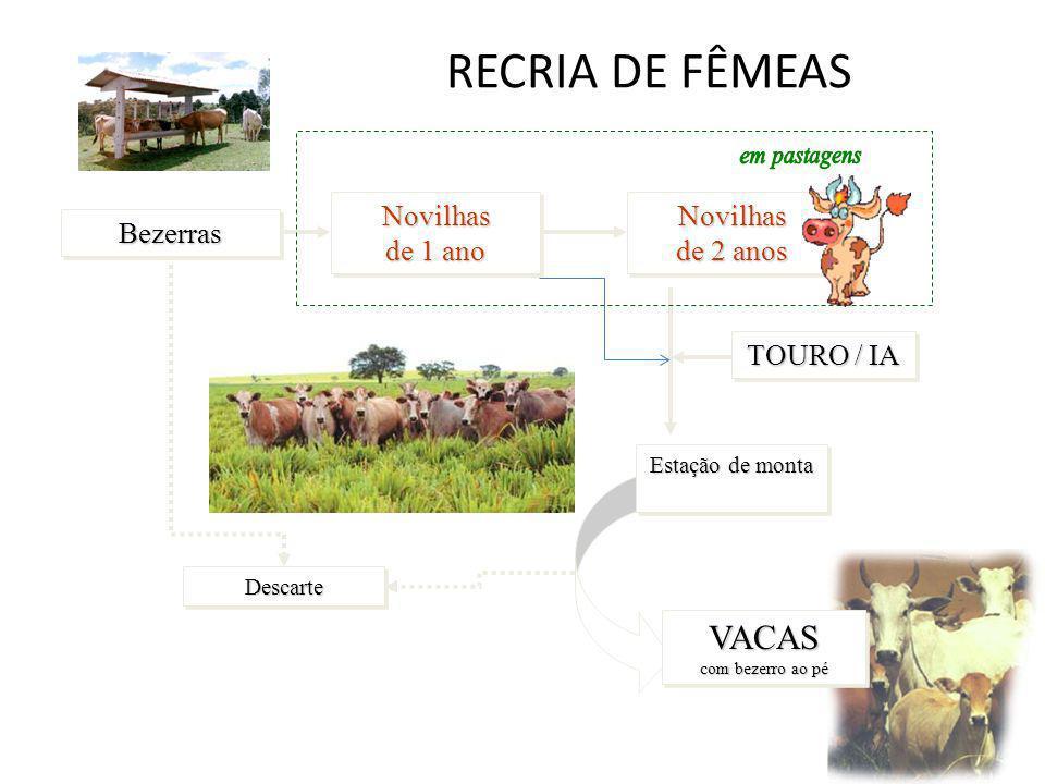 RECRIA DE FÊMEASDescarteDescarte Novilhas de 1 ano BezerrasBezerras Novilhas de 2 anos Estação de monta TOURO / IA VACAS com bezerro ao pé
