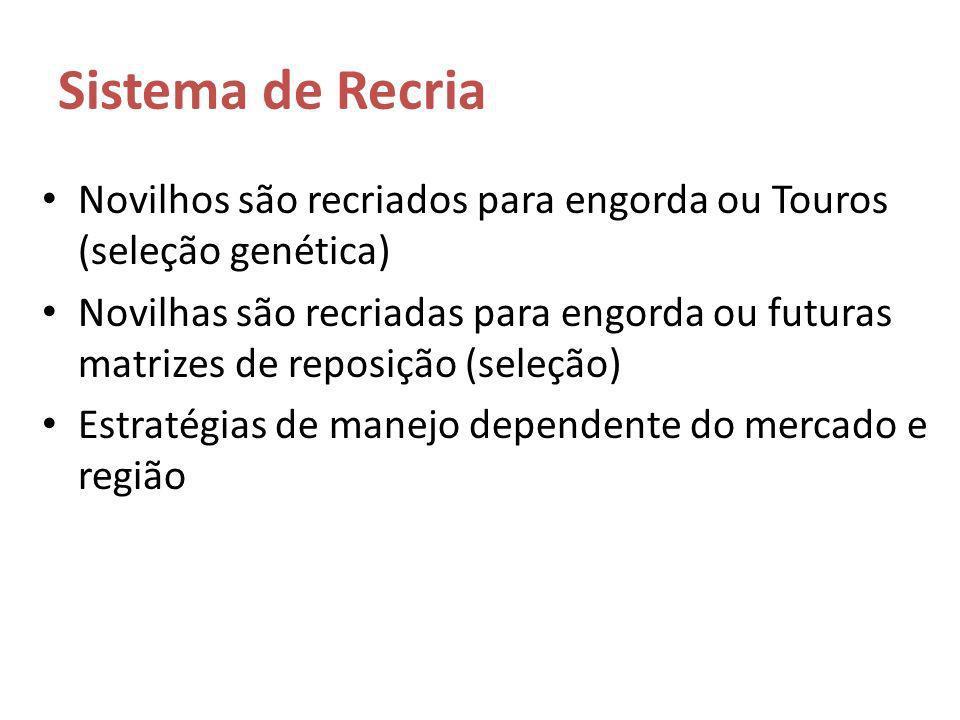 Sistema de Recria Novilhos são recriados para engorda ou Touros (seleção genética) Novilhas são recriadas para engorda ou futuras matrizes de reposiçã