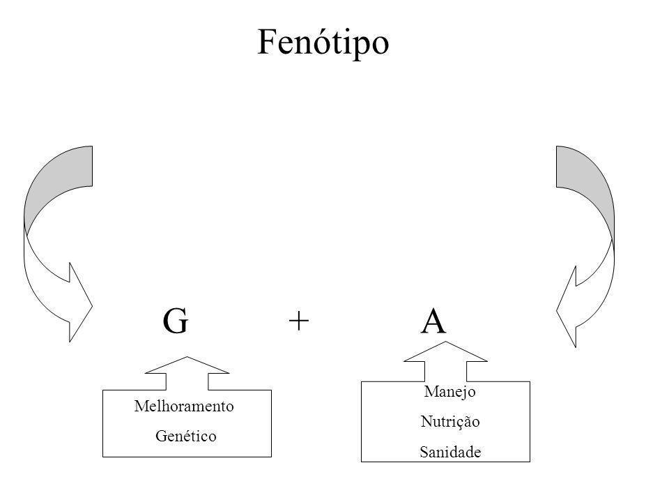 SISTEMA DE CRIAÇÃO SISTEMA DE CRIAÇÃO EM GADO DE CORTE Há os três sistemas clássicos: Extensivo Semi-intensivo Intensivo