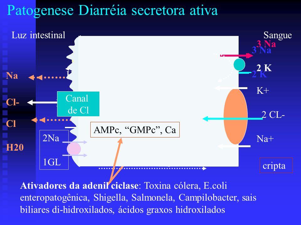 - - - Vilosidade Patogenese Diarréia secretora ativa água Luz intestinal Cl Na 3 Na 2 K ATP ADP H+ HCO 3 20% AMPc Na Cl H20 Sangue Ativadores da adeni