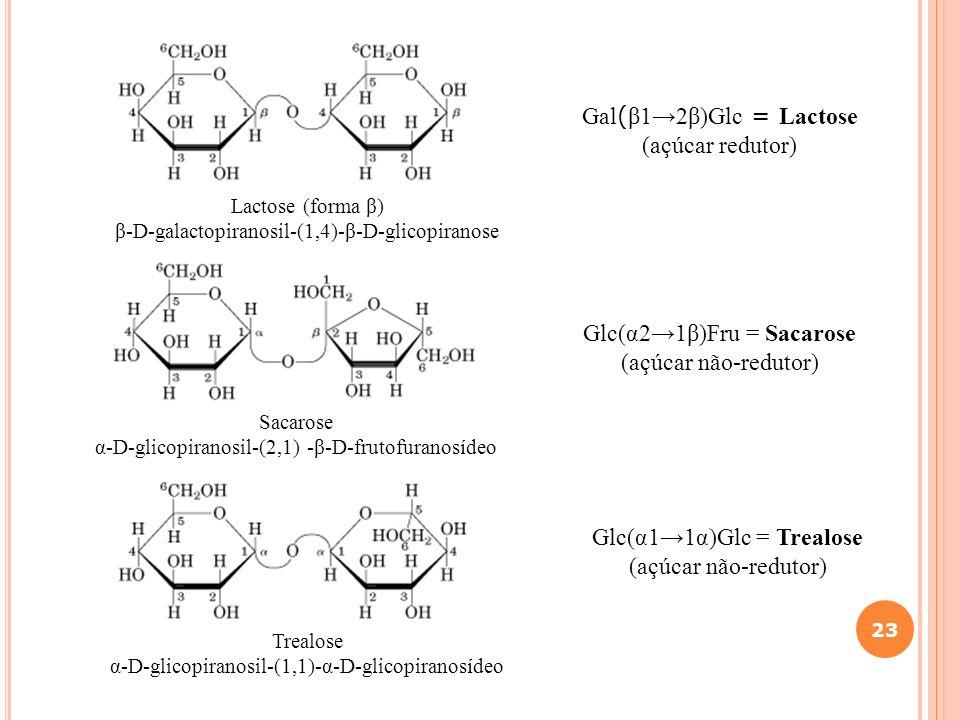 23 Gal ( β12β)Glc = Lactose (açúcar redutor) Lactose (forma β) β-D-galactopiranosil-(1,4)-β-D-glicopiranose Sacarose α-D-glicopiranosil-(2,1) -β-D-fru
