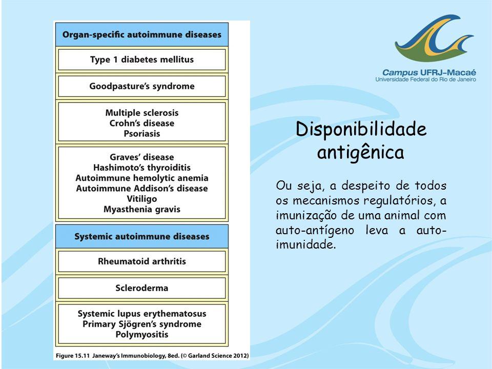 Disponibilidade antigênica Ou seja, a despeito de todos os mecanismos regulatórios, a imunização de uma animal com auto-antígeno leva a auto- imunidad