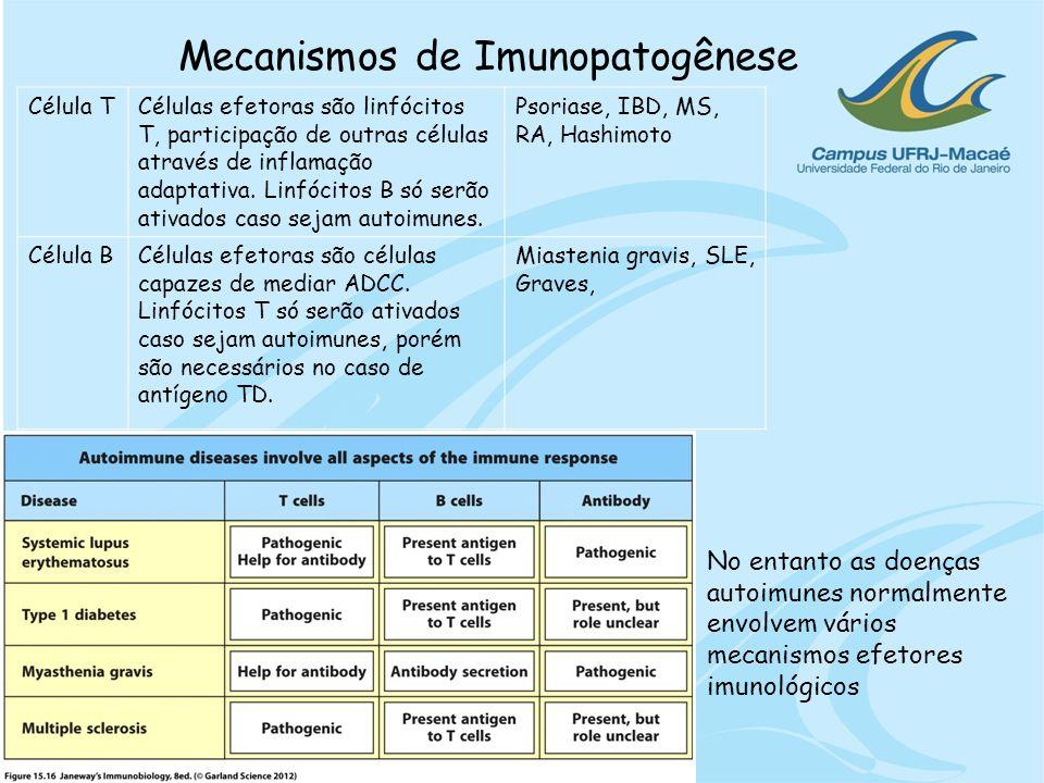 Mecanismos de Imunopatogênese Célula TCélulas efetoras são linfócitos T, participação de outras células através de inflamação adaptativa. Linfócitos B