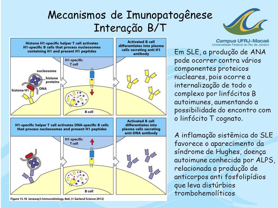 Mecanismos de Imunopatogênese Interação B/T Em SLE, a produção de ANA pode ocorrer contra vários componentes proteicos nucleares, pois ocorre a intern