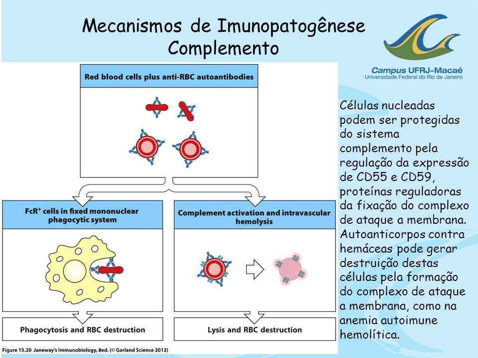Mecanismos de Imunopatogênese Complemento Células nucleadas podem ser protegidas do sistema complemento pela regulação da expressão de CD55 e CD59, pr