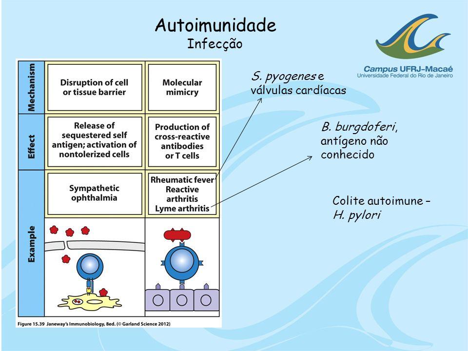 Autoimunidade Infecção S. pyogenes e válvulas cardíacas B. burgdoferi, antígeno não conhecido Colite autoimune – H. pylori