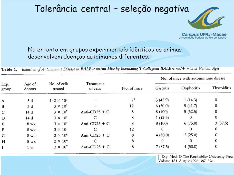Tolerância central – seleção negativac Células reguladoras naturais não definem o desenvolvimento da doença autoimune, porém podem controlá-la J Immunol.