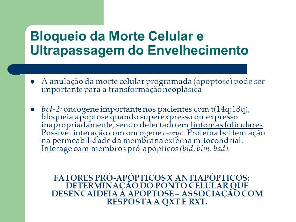 Bloqueio da Morte Celular e Ultrapassagem do Envelhecimento A anulação da morte celular programada (apoptose) pode ser importante para a transformação