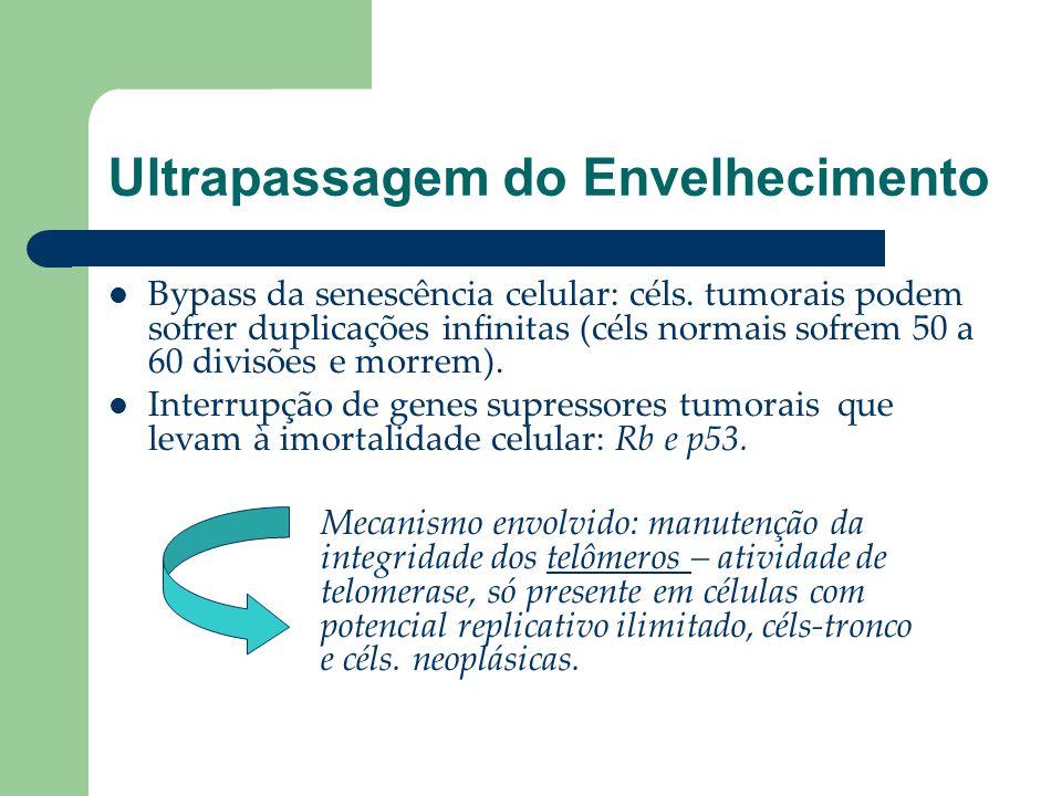 Ultrapassagem do Envelhecimento Bypass da senescência celular: céls. tumorais podem sofrer duplicações infinitas (céls normais sofrem 50 a 60 divisões
