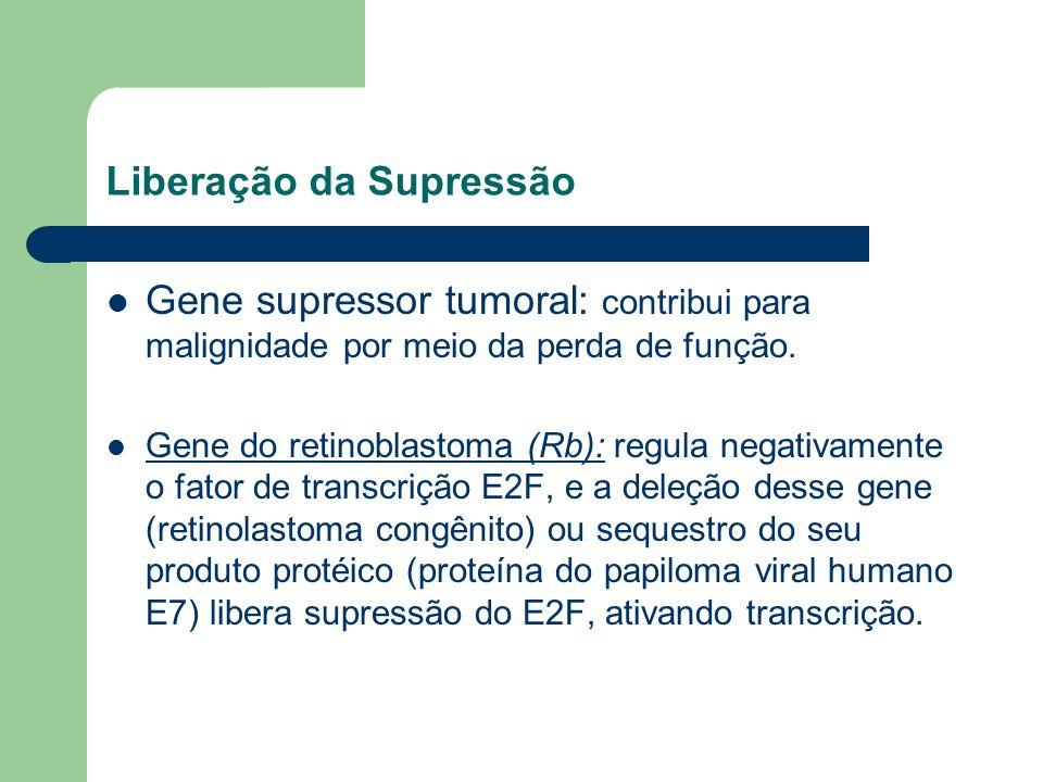 Liberação da Supressão Gene supressor tumoral: contribui para malignidade por meio da perda de função. Gene do retinoblastoma (Rb): regula negativamen