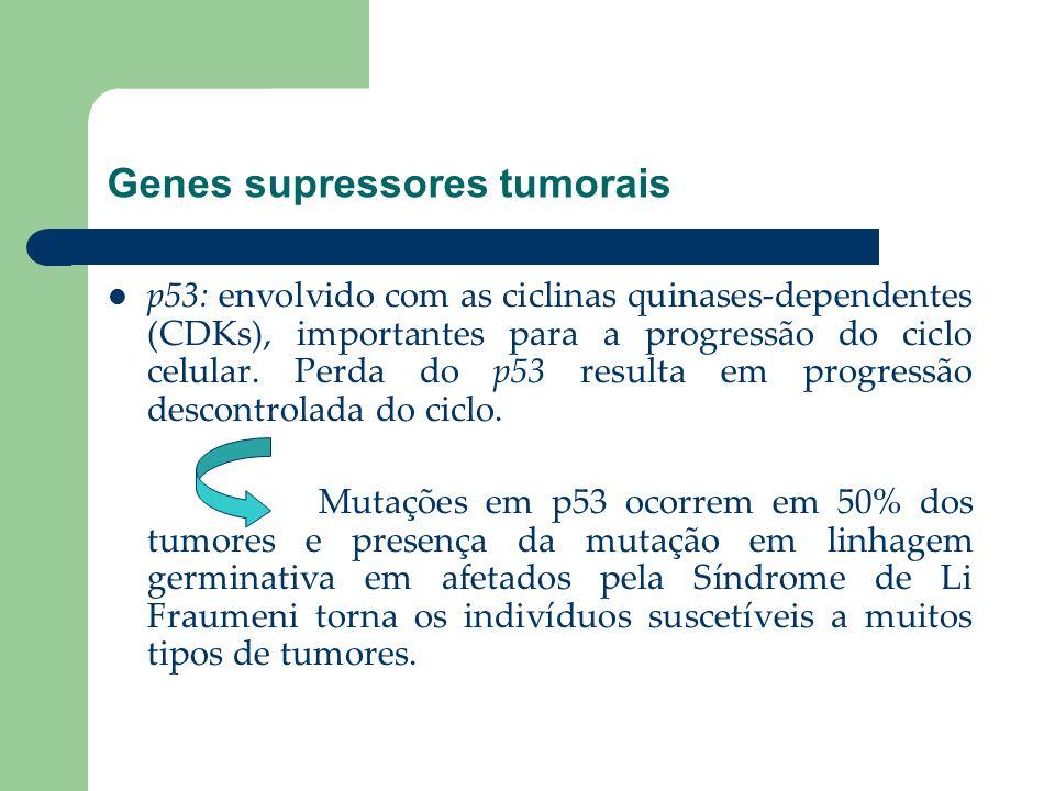 Genes supressores tumorais p53: envolvido com as ciclinas quinases-dependentes (CDKs), importantes para a progressão do ciclo celular. Perda do p53 re