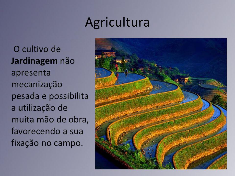 Agricultura O cultivo de Jardinagem não apresenta mecanização pesada e possibilita a utilização de muita mão de obra, favorecendo a sua fixação no cam