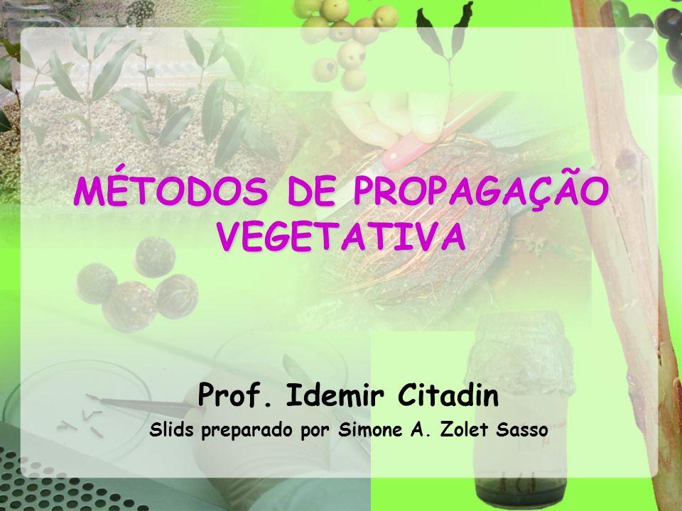 MÉTODOS DE PROPAGAÇÃO VEGETATIVA Prof. Idemir Citadin Slids preparado por Simone A. Zolet Sasso