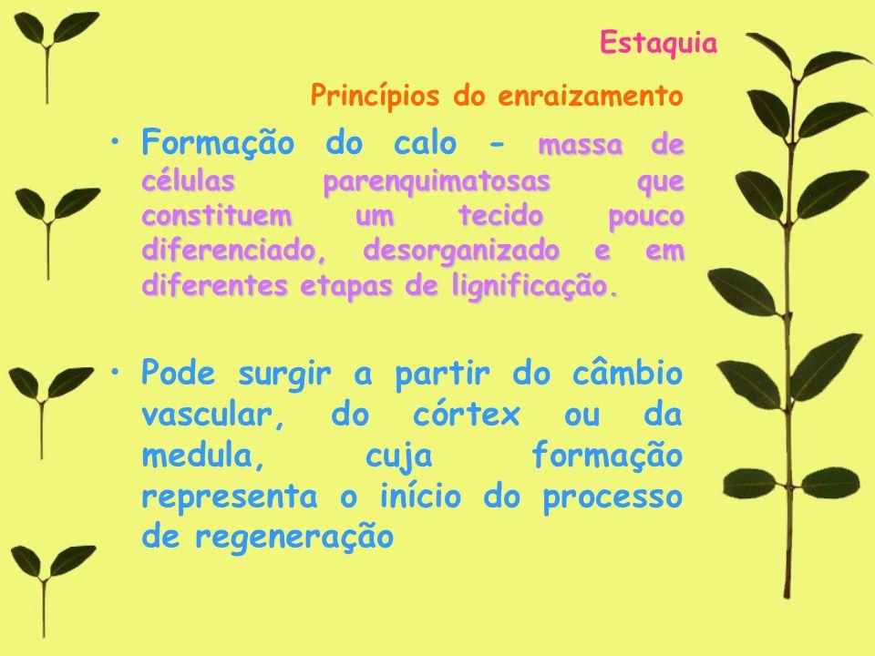 Estaquia Princípios do enraizamento massa de células parenquimatosas que constituem um tecido pouco diferenciado, desorganizado e em diferentes etapas