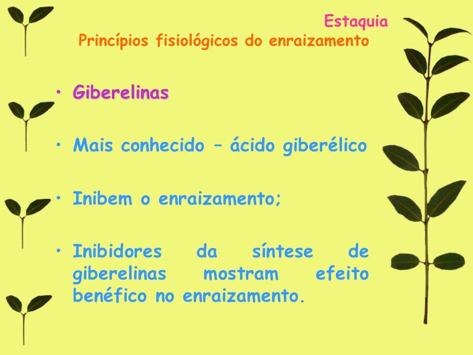Estaquia Princípios fisiológicos do enraizamento GiberelinasGiberelinas Mais conhecido – ácido giberélico Inibem o enraizamento; Inibidores da síntese