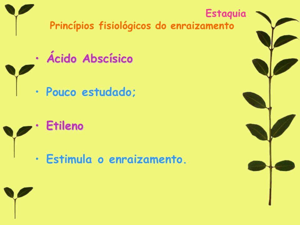 Estaquia Princípios fisiológicos do enraizamento Ácido AbscísicoÁcido Abscísico Pouco estudado; EtilenoEtileno Estimula o enraizamento.