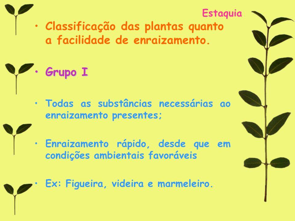 Estaquia Classificação das plantas quanto a facilidade de enraizamento. Grupo IGrupo I Todas as substâncias necessárias ao enraizamento presentes; Enr