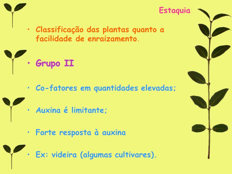 Estaquia Classificação das plantas quanto a facilidade de enraizamento. Grupo IIGrupo II Co-fatores em quantidades elevadas; Auxina é limitante; Forte