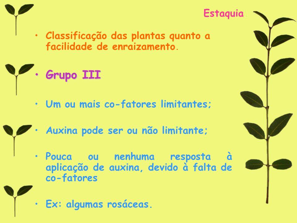 Estaquia Classificação das plantas quanto a facilidade de enraizamento. Grupo IIIGrupo III Um ou mais co-fatores limitantes; Auxina pode ser ou não li